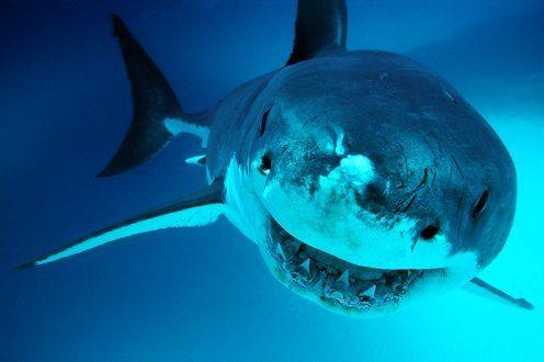 shark-week06