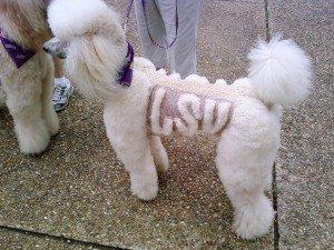 LSU_dog